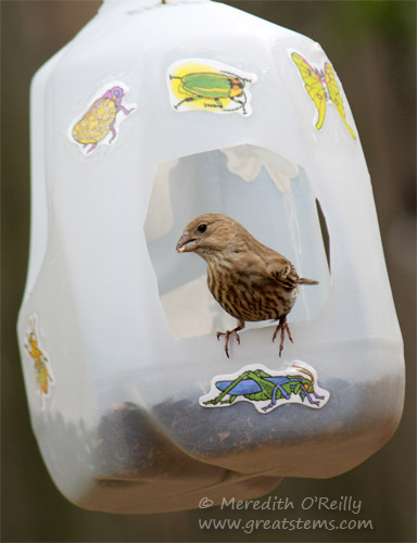 DIY Milk Jug Bird Feeders