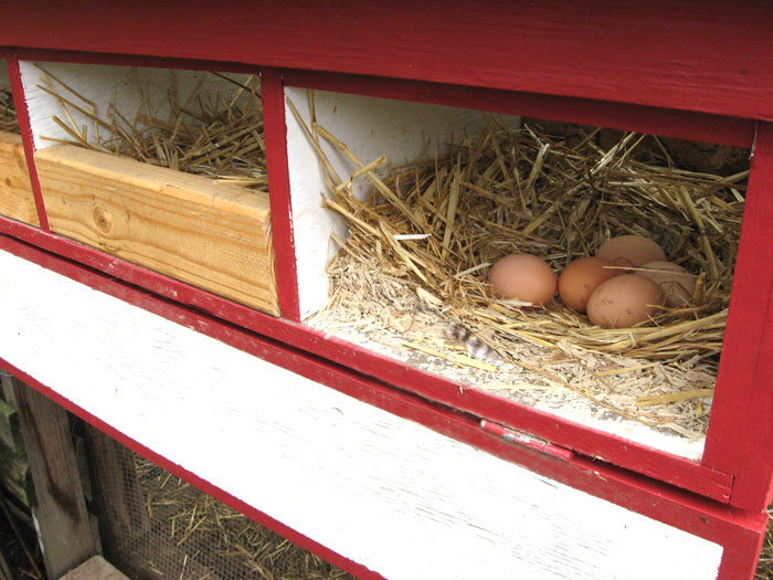 DIY External Nest Boxes for Chicken