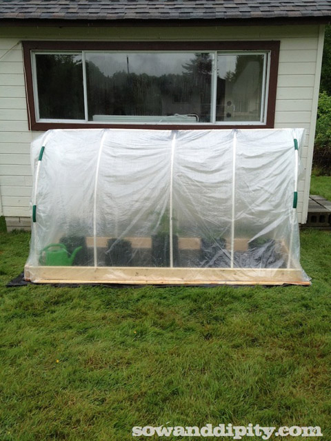 The Original $50 DIY Greenhouse