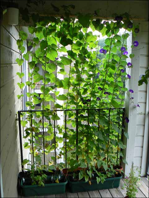 Tiered Hanging Vines
